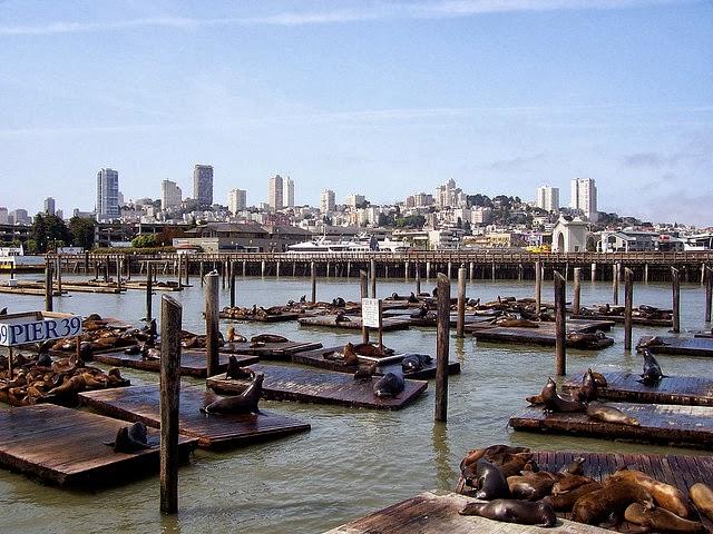 Pier 39 sea lion lions k-dock san francisco 4