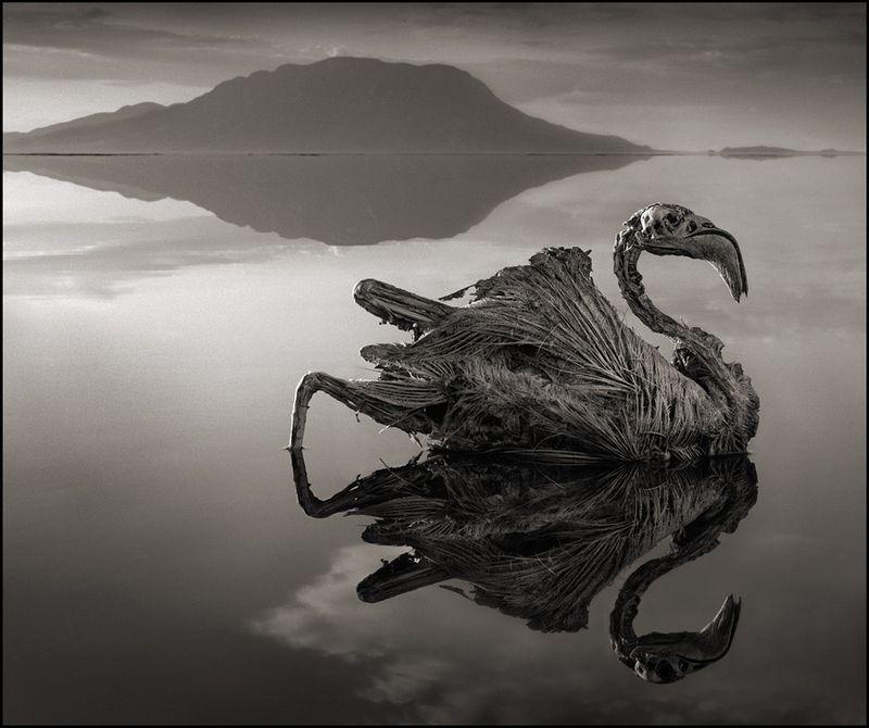 Lakenatron