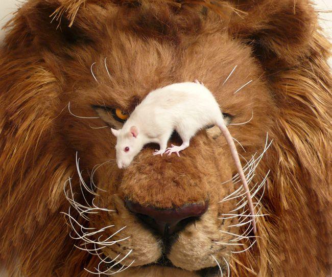 Mouselion