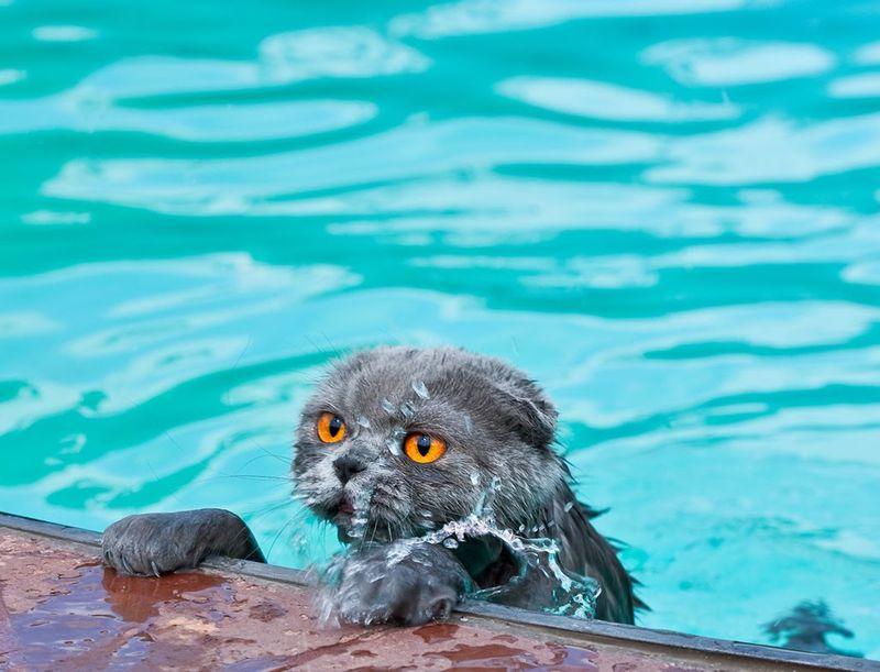 Catswim