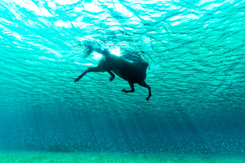 Swimminghorse