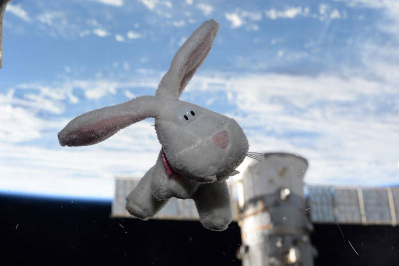 Happy-easter-from-space-scott-kelly-iss-bunny-rabbit