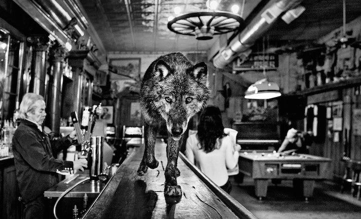WolfBar