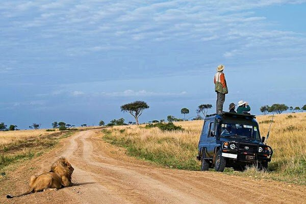 Lionoberserver